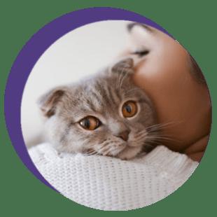 diagnóstico e transmissão de esporotricose
